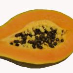 Papaya web. Foto Bencivinni