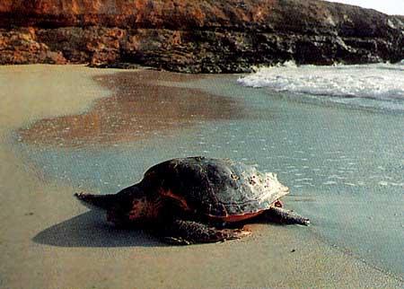 isole-pelagie-tartaruga-marina