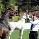 cavallo_handler