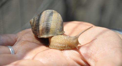 Burgio-la-lumaca-di-Micelis-Snail