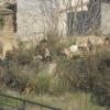 Banchi di cani di tredici componenti!