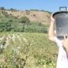 """""""Vendemmia della legalità"""",  la """"Fondazione San Vito Onlus"""" cerca volontari per la vendemmia nei terreni confiscati alla mafia di Salemi e Calatafimi"""